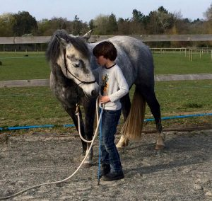 The Horse Course, Equine assisted therapy